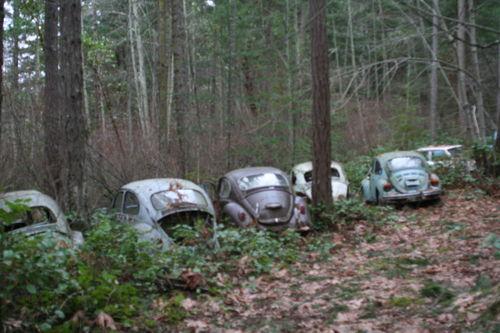 Bug Graveyard